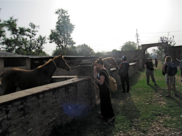 HORSE BREEDING AT BHANWAR VILAS