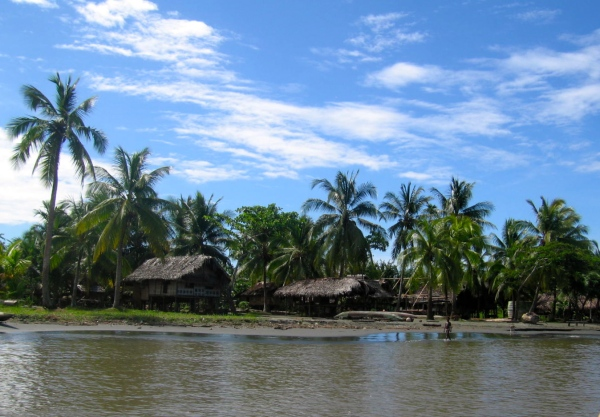 THATCHED HOUSES MADE FROM SAGO PALMS