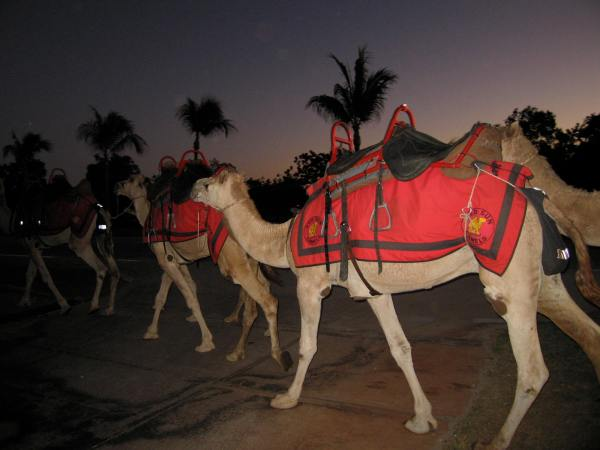 CAMEL SAFARIS ALONG CABLE BEACH ARE ONE OF THE TOURIST ATTRACTIONS IN BROOME