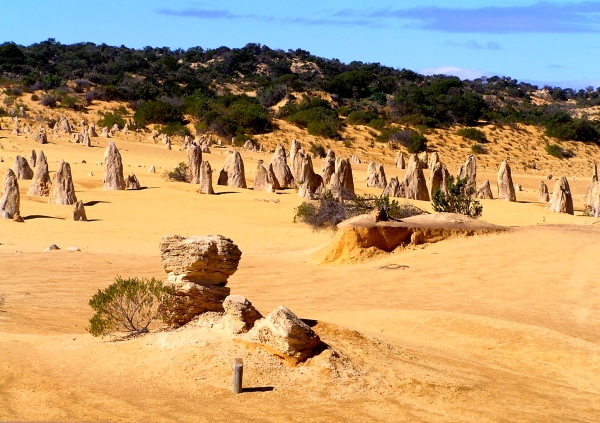 PINNACLES - History: The first known European recording of the Nambung area dates back to 1658, when the North and South Hummocks first appeared on Dutch maps. The Hummocks were also mentioned in navigator Philip Parker King's journal in about 1820. Nambung is an Aboriginal word that means crooked or winding and it was from this river that the park was named.