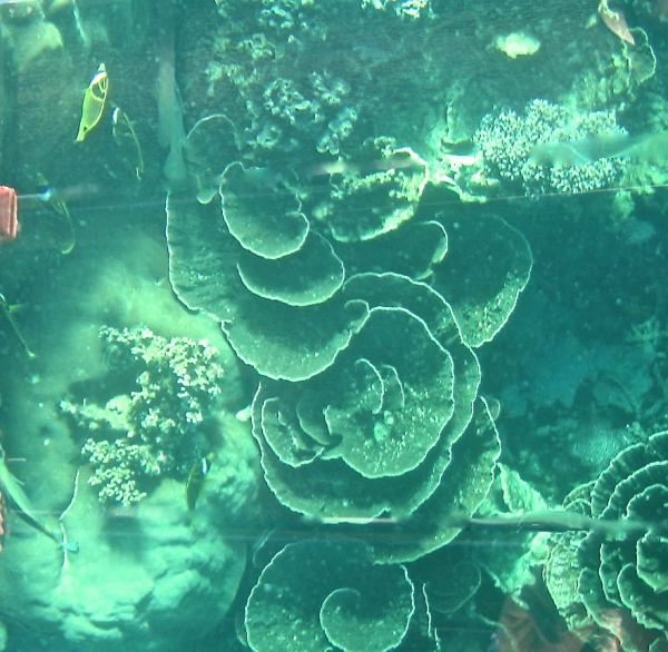 CLOSE-UP OF THE CORAL