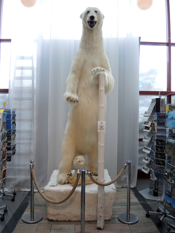 THE ARCTIC CIRCLE CENTER - STUFFED POLAR BEAR